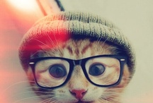 fancy nerd
