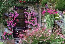 How Should My Garden Grow / Beautiful garden ideas, flowers, containers and projects.   / by linda musser