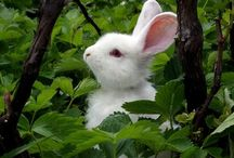 Bunnies / Bunny and rabbit