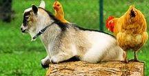 ✦Farm Animal Sanctuary✦ / Sanctuary Sunday is our collection of posts about Farm animal sanctuaries we find inspirational.
