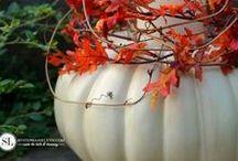 Fall Home Decor / Fall Home Decor | Fall Decor | Fall DIY Decor | Autumn Home Decor | Autumn Decor | Autumn DIY Decor