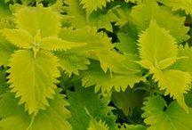 Houseplants - Stofublóm - Potteplanter / Houseplants- alt det der ikke kan vokse udenfor i det nordiske klima