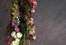 Beautiful Blooms... / by Shabi Vijay