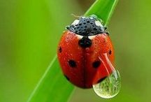 Bugs I like -  Søde insecter - Skordýr