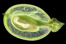 Seeds - frø - fræ