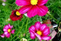 Flowers- blomster- blóm