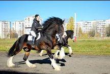 Draft horses / Draft horses, working horses