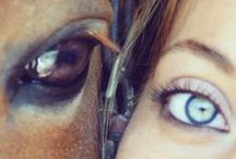 Eye of the Horse / Close ups of horse eyes