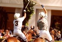 Polo Horses / Polo and Polo horses
