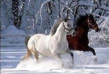 Winter Horses / Horses in Winter and in Snow