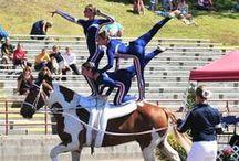 Vaulting with Horses / Vaulting with horses, vaulting teams
