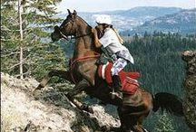 Endurance Horse Racing / Endurance Races, Endurance Horses, Long Distance Horse  Racing