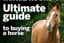 Buying Horses and Leasing Horses