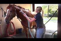 Groomong for Horses