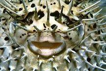 << peixes IRADOS >>