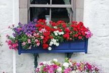 Window boxes! / by Vicky