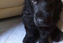 Joe e Lilli❤️ / Our dogs - i nostri cuccioli