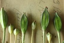 Seeds & Pods / mother nature at her best