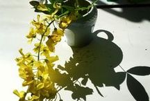 YELLOW...and gray / mustard, marigold and yellow ochre...forever uplifting