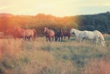 ❤️Horses❤️ / My Favoutie Animal<3❤ / by Kathy Medeiros