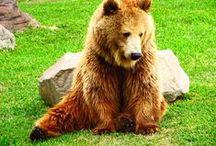 """Animales Zoo / Parque de Las Leyendas / by Jhon """"Jocker"""" Kevin"""