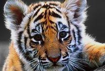 Cutest animal kingdom
