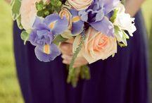 DaphneRosa in Bloom... February - Iris