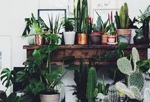 DECO: green touch / DECO IDEAS for for all those who love sharing his home with plants and cactus