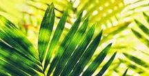 Tropical Shades / Coastal Inspiration: paradisiac islands, exotic birds, flowers and fruits... in bright colors like turquoise blue, acid green or lime yellow