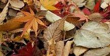 Autumn Shades / Autumn Inspiration: the toasted colors