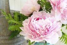 Fleurs & Compositions