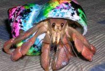Crazy Crabs / by Pet City WA