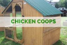 OUTDOORS :: Chicken Coops / Carolina Backyards chicken coops.  No matter what size flock you have, we can accommodate!