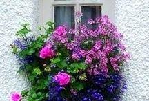 """A beleza das janelas e sacadas... sofisticadas, simples ou com flores... / """"De vez em quando, surge um vento mais forte e fecha as janelas pelo lado de fora. Quando acontece, é bobagem tentar brigar com o vento. A gente espera ele esvaziar e reabre as janelas pelo lado de dentro."""" Ana Jácomo / by Lelia Sarda"""