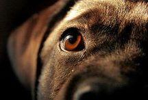 Cani / Dog's world. Viaggio nell'universo canino :)