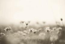 whisper / by Elizabeth Gray Felty Forest