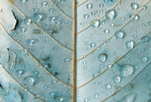 little turquoise details / by Elizabeth Gray Felty Forest