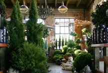 Outdoor Life / Items available for your patio - from furniture to pots and permanent botanicals
