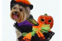 Dog Costumes / by Wayfair.com