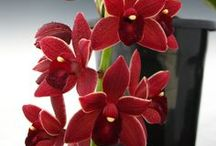 Anniversary Orchids / by 1888Orchids