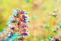 Floral and Gardens / floral inspirations, dream gardens / by Ann Frost