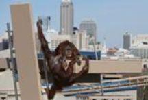 Indianapolis Zoo / Indy Zoo / by Dan Bertram