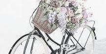 Pretty Bicycles / Pretty Bicycles