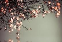 BEAUTIFUL! / by Joan Myrick