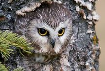 OWLS GIVE A HOOT! / by Joan Myrick