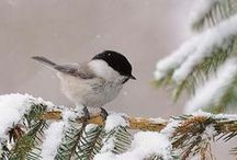 FOR THE BIRDS... / Be like the bird, who halting in his flight on limb too slight, feels it give way beneath him, yet sings knowing he hath wings. / by Joan Myrick