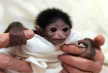 ANIMAL BABIES...SOOO CUTE! / Formerly  ALL BABIES ARE CUTE!!! / by Joan Myrick