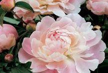 FLOWER POWER!  <3 / Flowers are heaven's masterpiece. / by Joan Myrick