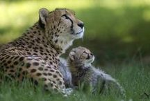 MOTHERLY LOVE / by Joan Myrick