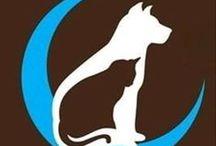 Animal Adoption Events & Fundraisers